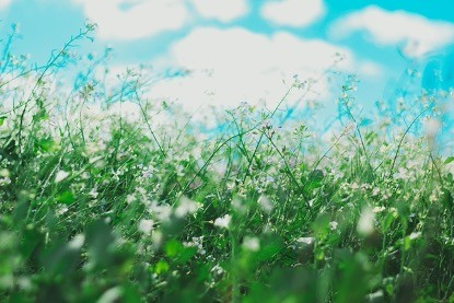 Are hayfever and other allergies ruining your life?